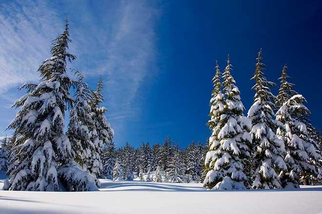 Покрыта земля зимою